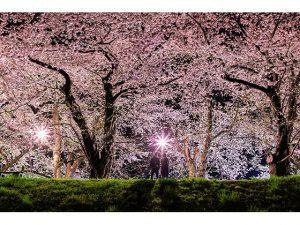 [RJ269740] (てぃんがーら) 朱緋桜~約束の木の下で~