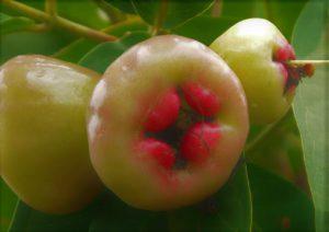 [RJ306719] (Tagtraum) 毛むくじゃらの果物ー台北の白実夢 Ep2